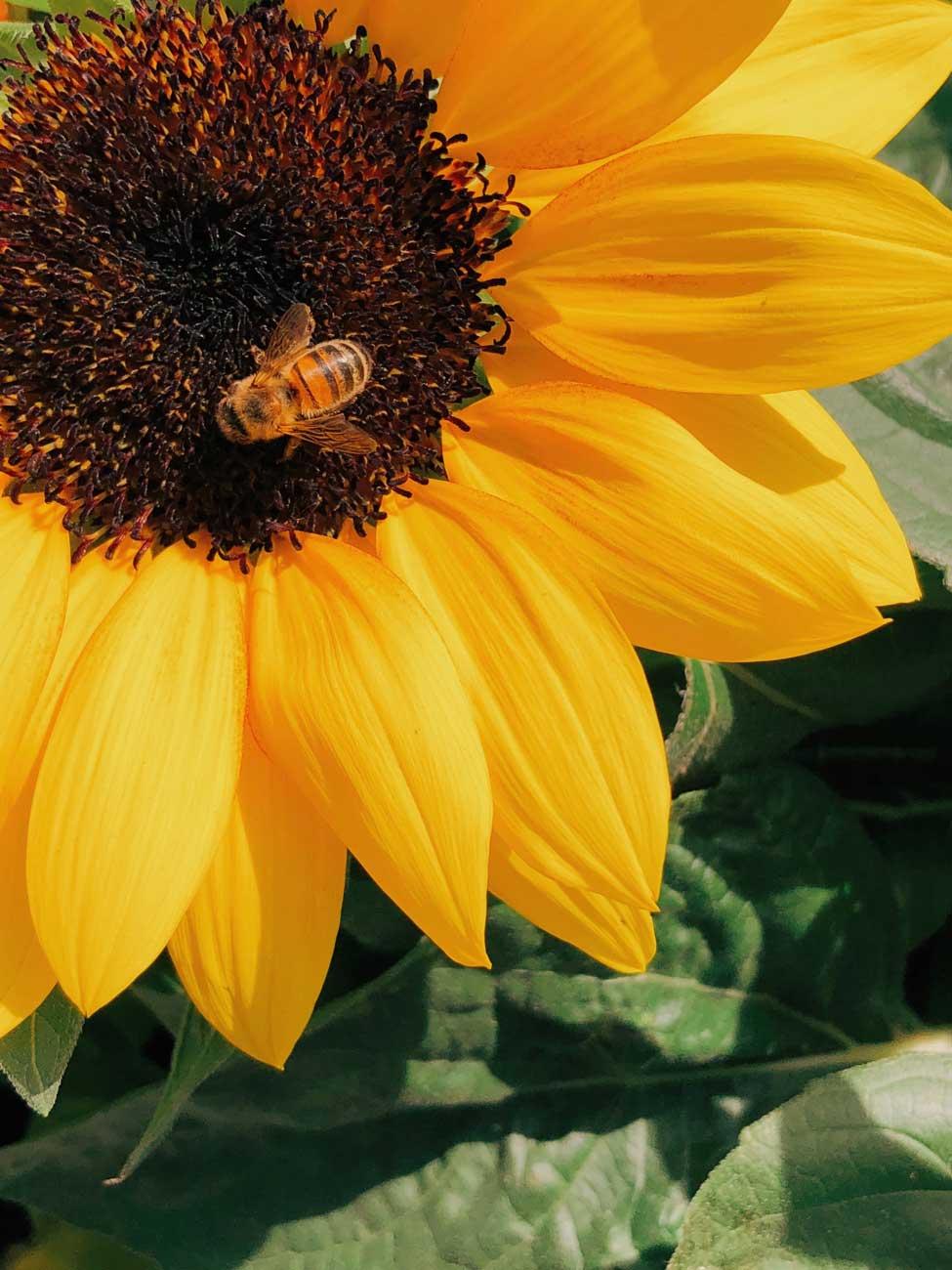Nikiti's apiary